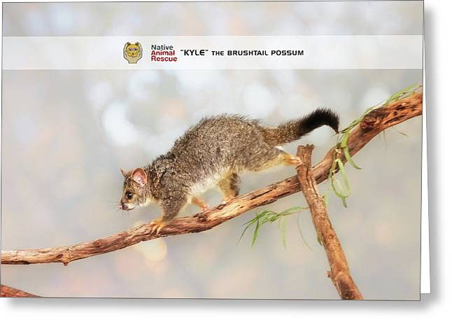 Kyle The Brushtail Possum, Native Animal Rescue Greeting Card by Dave Catley
