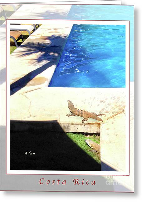 la Casita Playa Hermosa Puntarenas Costa Rica - Iguanas Poolside Greeting Card Poster Greeting Card