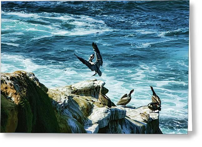 La Jolla California Pelican Landing Greeting Card by Georgia Mizuleva