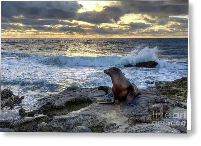 La Jolla Sea Lion Greeting Card by Eddie Yerkish
