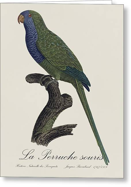 La Perruche Souris / Monk Parakeet- Restored 19th Century Illustration By Jacques Barraband  Greeting Card