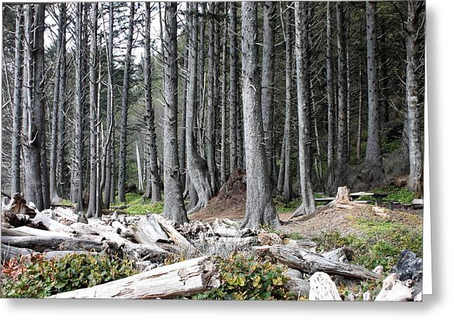 Forks Washington Greeting Cards - La Push Beach Trees Greeting Card by Carol Groenen