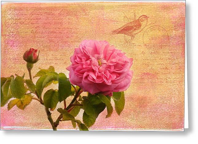 La Rose Greeting Card by Kim Hojnacki
