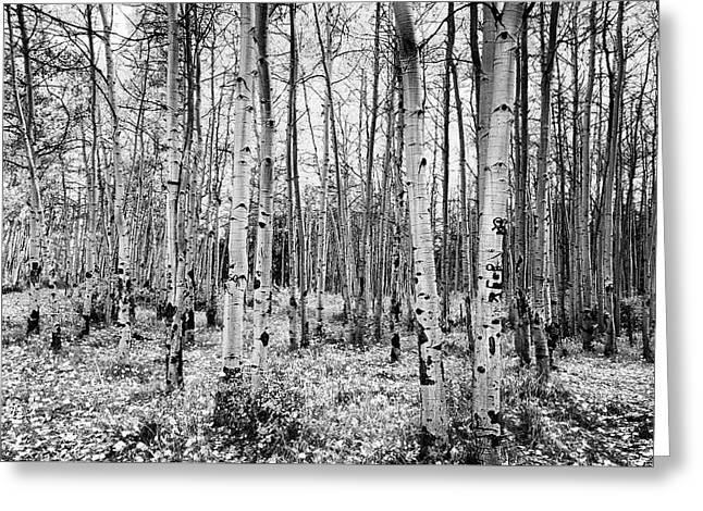 La Sal Aspen Black And White Greeting Card by Mark Kiver