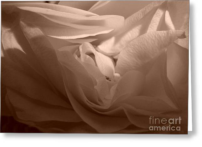 Greeting Card featuring the photograph La Vie En Rose by Danica Radman