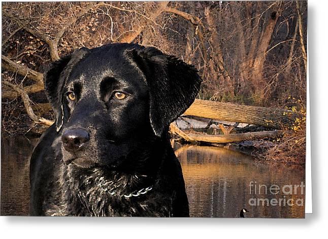Labrador Retriever Greeting Card by Cathy  Beharriell