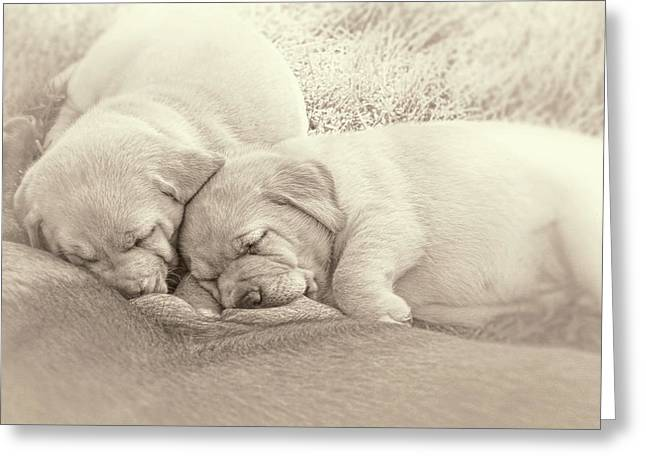 Greeting Card featuring the photograph Labrador Retriever Puppies Nursing Sepia by Jennie Marie Schell