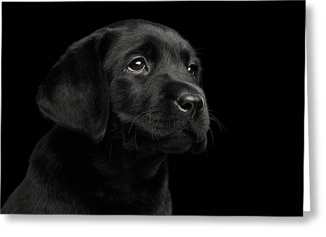 Labrador Retriever Puppy Isolated On Black Background Greeting Card