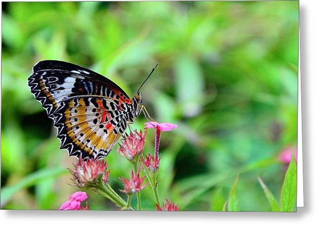 Greeting Card featuring the photograph Lace Wing Butterfly by Corinne Rhode