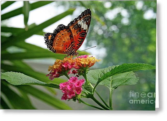 Lacewing Butterfly Greeting Card