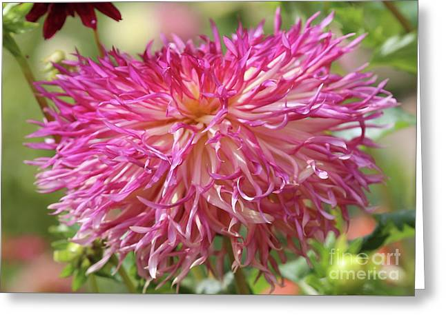 Lacy Dahlia Macro Greeting Card