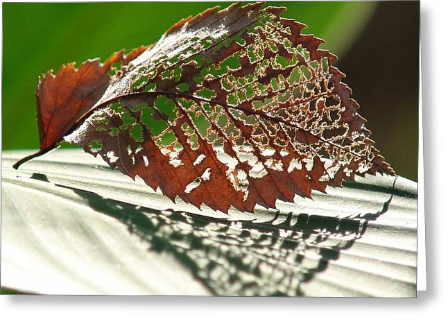 Lacy Leaf Greeting Card by Kevin Callahan