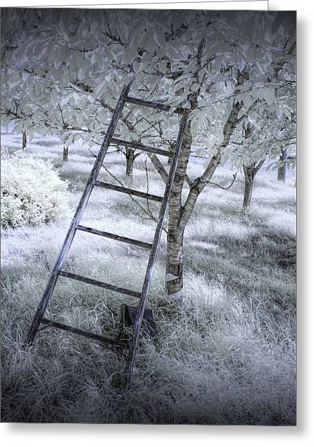 Ladder In A Cherry Orchard In Infrared Greeting Card by Randall Nyhof