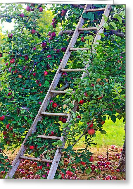 Ladder To The Top Greeting Card