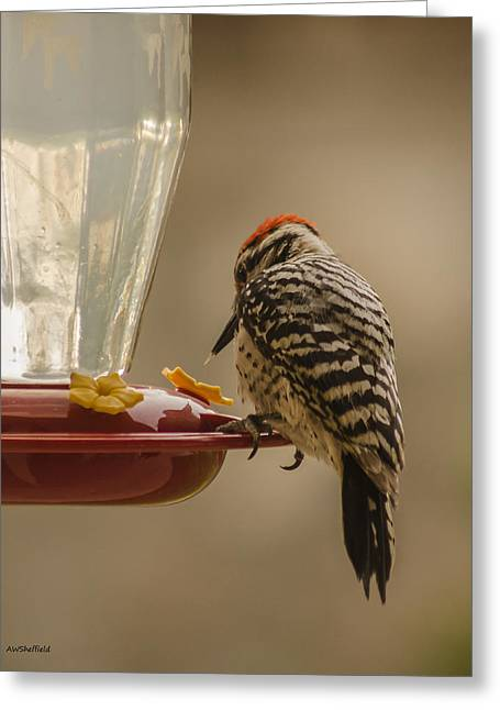 Ladderback Woodpecker 2 Greeting Card by Allen Sheffield