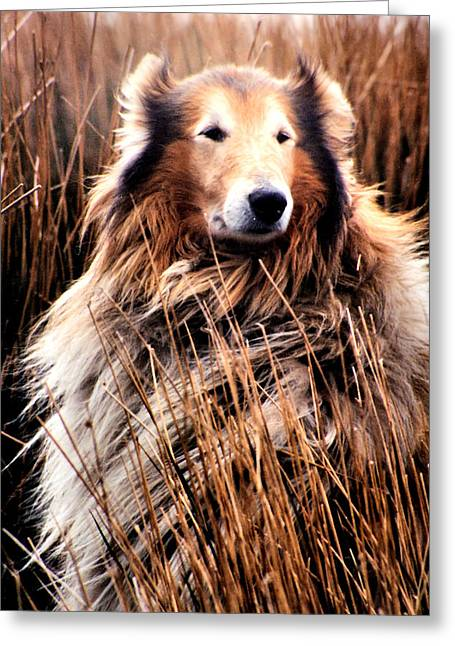 Laddie In Charge Greeting Card by Ellen Lerner ODonnell