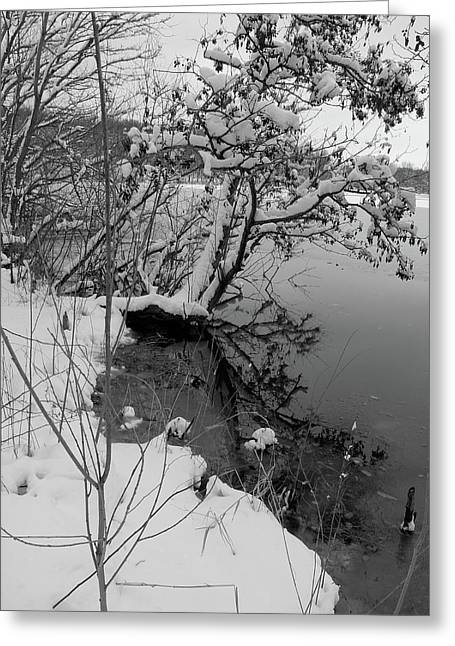 Laden With Winter Greeting Card by Scott Kingery
