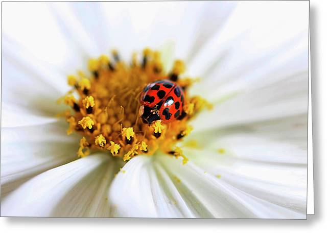 Lady Bug And Her Cosmo Greeting Card by Darren Fisher