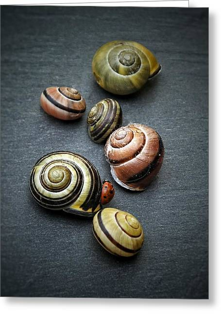 Lady Bug And Snail Shells 1 Greeting Card