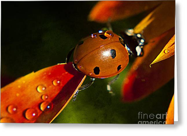 Lady Bug Bridge Greeting Card