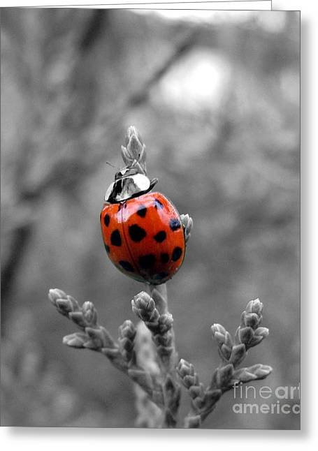 Greeting Card featuring the photograph Lady Bug by Misha Bean