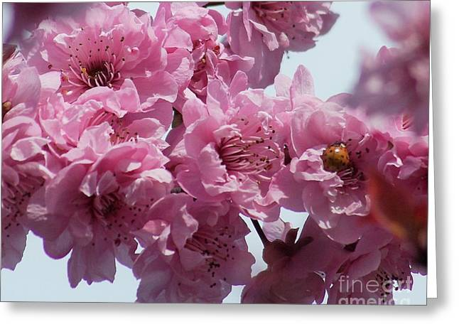 Greeting Card featuring the photograph Lady Bug by Victor K