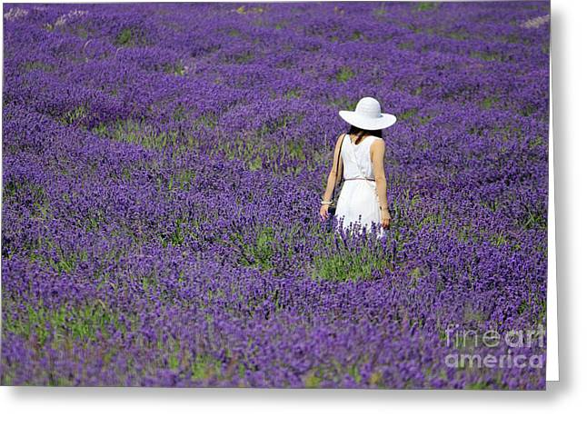 Lady In Lavender Field Greeting Card