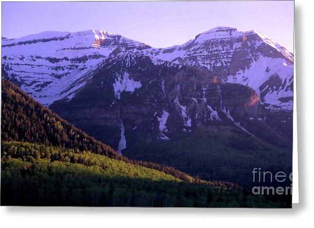 Lady Of The Night  Greeting Card by Dave Hampton Photography