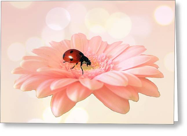 Daisy Digital Greeting Cards - Lady on pink Greeting Card by Sharon Lisa Clarke