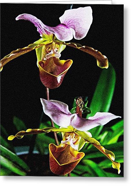 Lady Slipper Orchid Greeting Card by Elf Evans