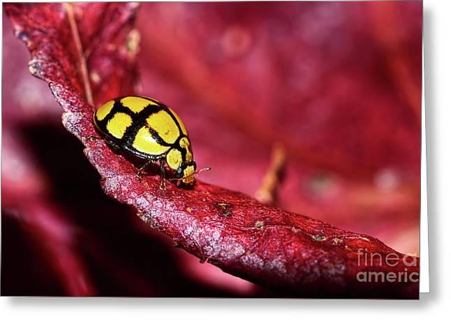 Ladybird Exploring By Kaye Menner Greeting Card