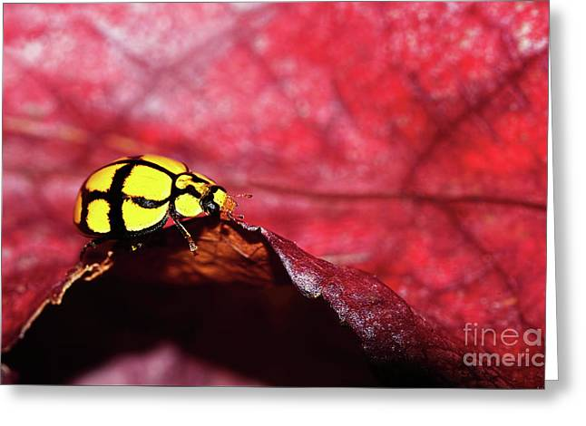 Ladybird On The Edge By Kaye Menner Greeting Card