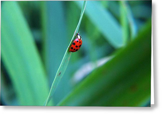 Ladybug Greeting Card by Belinda Cox