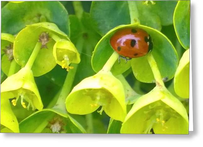 #ladybug Found Some Shelter From The Greeting Card