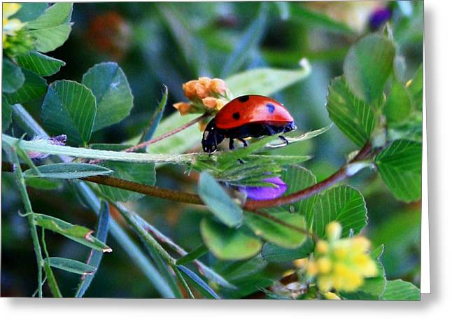 Ladybug Haven Greeting Card