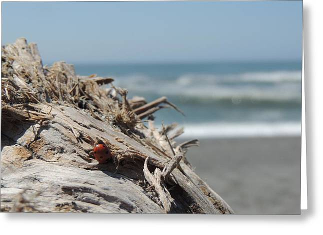 Ladybug In Driftwood Greeting Card by Traci Hallstrom