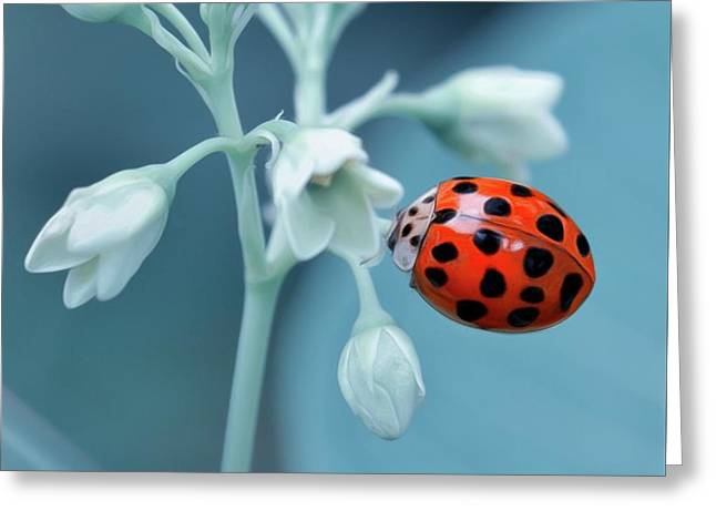 Greeting Card featuring the photograph Ladybug by Mark Fuller