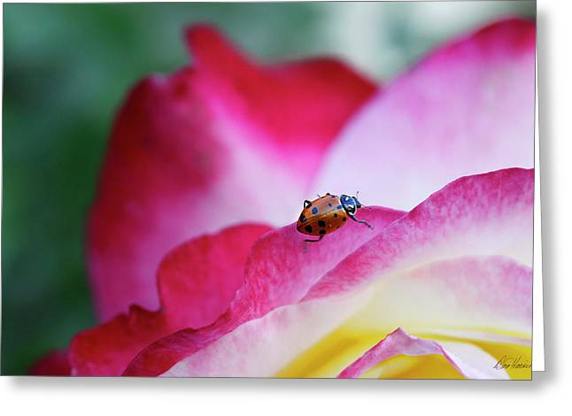 Ladybug On A Rose Greeting Card by Diana Haronis