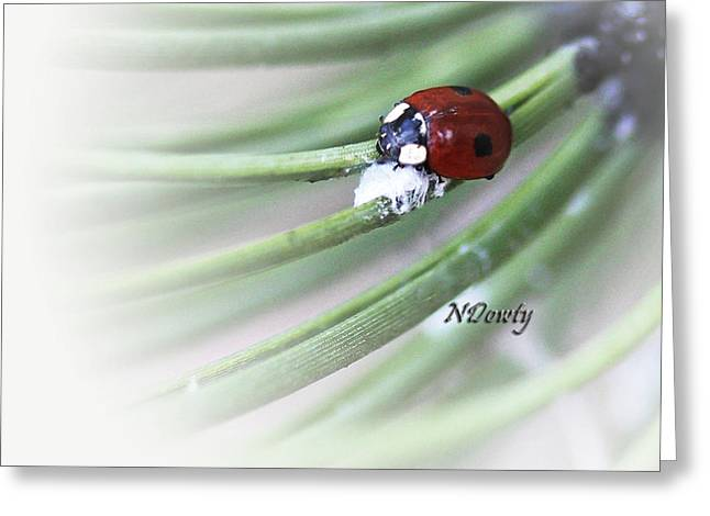 Ladybug On Pine Greeting Card