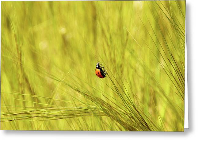 Ladybug In A Wheat Field Greeting Card