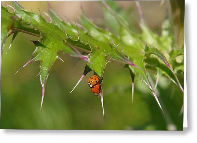 Ladybugs Greeting Card by Alicia Morales