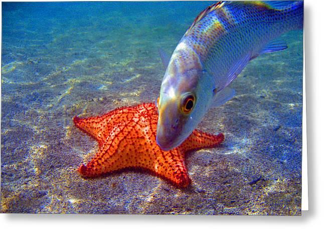 Laguna Stars Greeting Card by Kelly     ZumBerge
