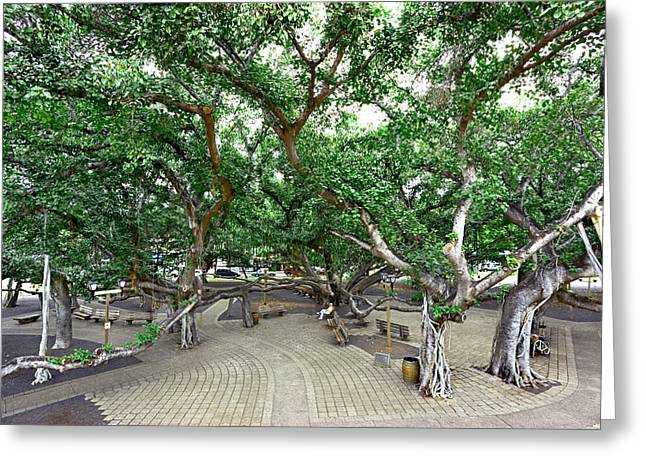 Lahaina Banyan Tree #6 - Overview Of A Huge Banyan Tree In Maui Greeting Card by Nature  Photographer