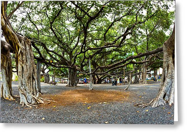 Lahaina Banyan Tree #7 - Huge Banyan Tree In A Park In Lahaina Greeting Card by Nature  Photographer