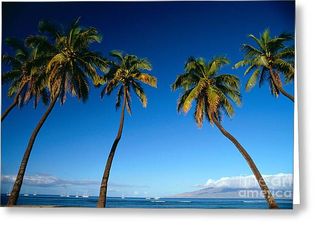 Lahaina, Five Coconut Tre Greeting Card