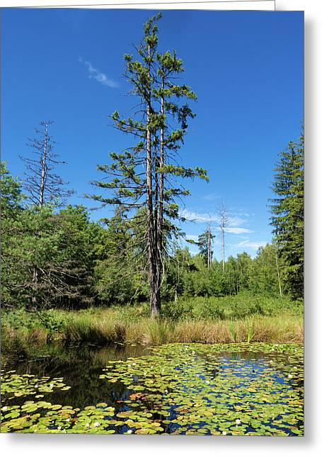 Greeting Card featuring the photograph Lake Birkensee Nature Park Schoenbuch Germany by Matthias Hauser