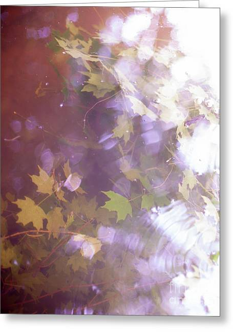Lake Capture2 Greeting Card by Lacey Renae