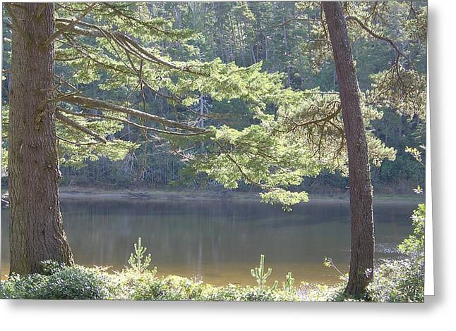 Greeting Card featuring the photograph Lake Chamberlin by Angi Parks