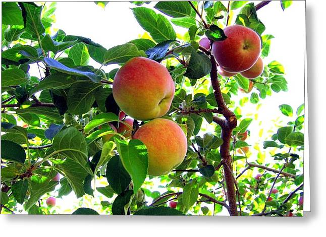 Yield Greeting Cards - Lake Country Apples Greeting Card by Will Borden