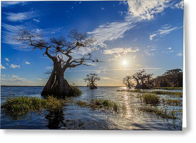 Lake Disston Cypress Paradise Greeting Card